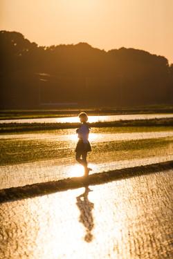 新利根 千葉県  Shintone, Chiba Prefecture