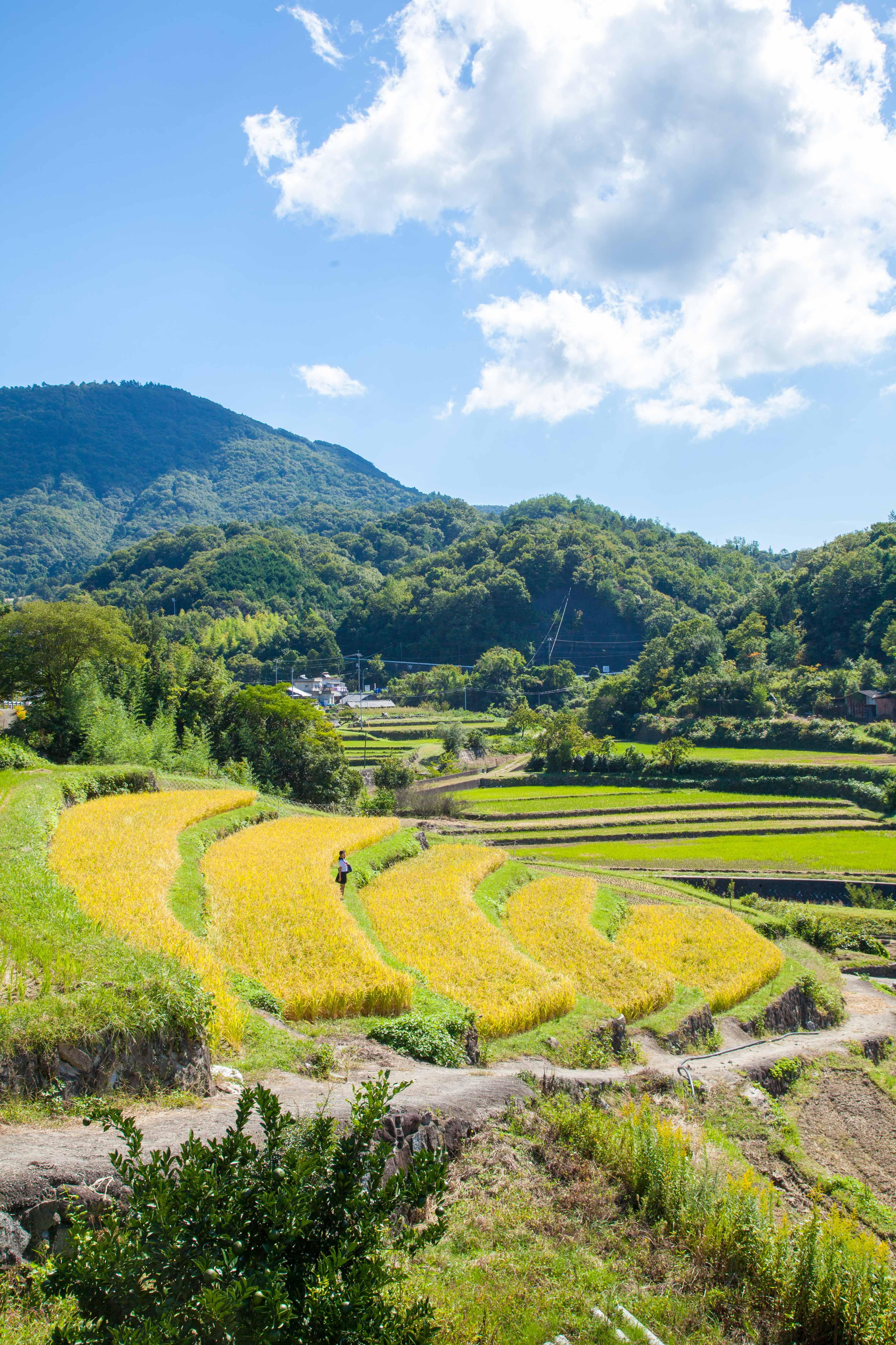 小豆島 香川県 Shodo Island , Kagawa Prefecture