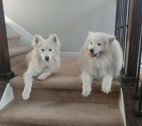 Pups_edited.jpg