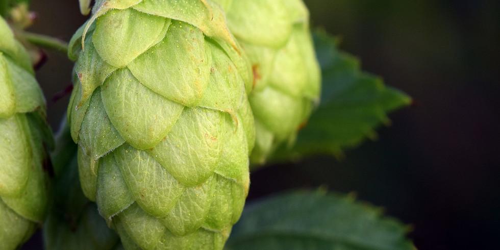 Innviertler Biermärz - Grillkurs Hopfen und Malz