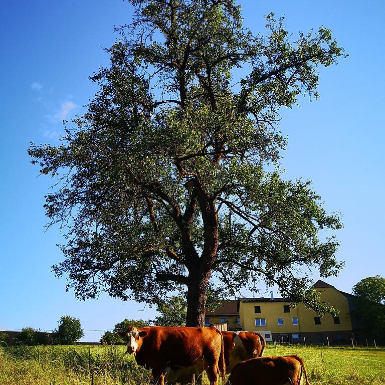 Erlebnis Bauernhof für Kinder - Ganzer Tag