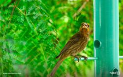 bird-seed-feeder-hagerman-ecommerce