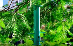 sunny-bird-feeder-mexico-designed