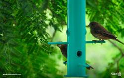tototl-semillero-comedero-aves