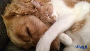 Plano de saúde Pet pode salvar a vida do seu amigo de estimação?