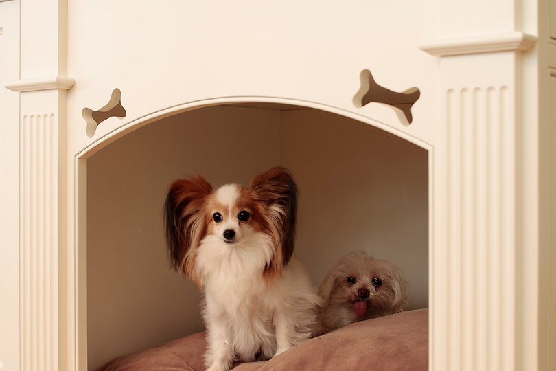 Cute Kitchen Nook for the Dogs