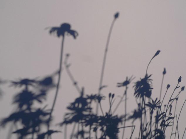 """Flowers"" Photos & Paintings 2012"