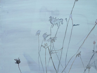 daisies 6 2011