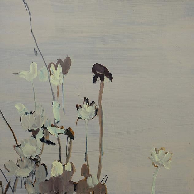 daisies 0 2011