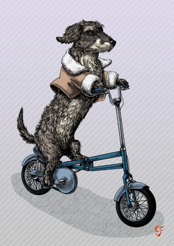 Dachshund on a foldable bike