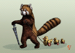 Red Panda with toy ducks