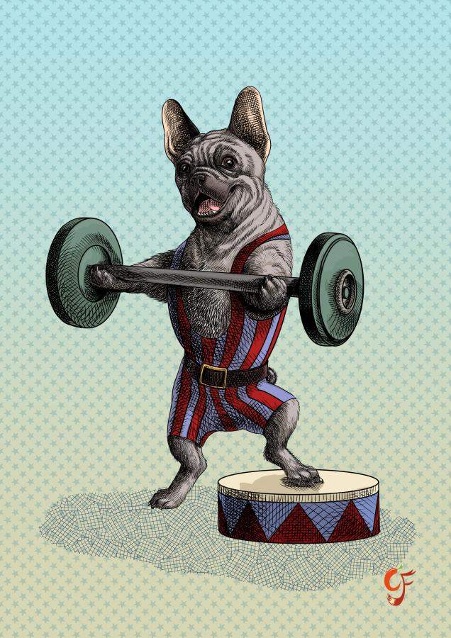 French Bulldog Weightlifter
