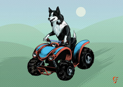 Sheepdog on Quadbike