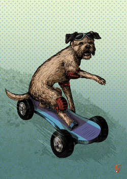 Boarder Terrier