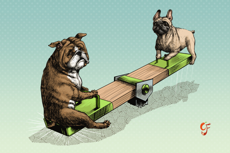 British and French Bulldog Seesaw