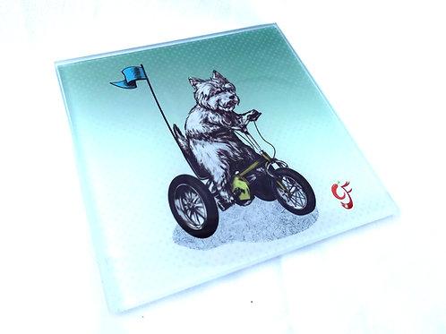 West Highland Terrier on Trike Glass Coaster