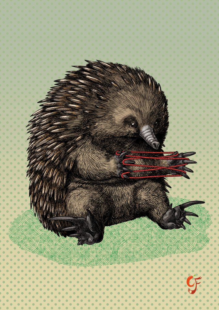 Echidna playing cats cradle