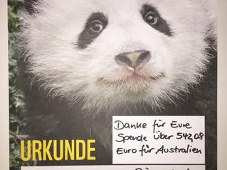 WWF-Spende zur Rettung der Koalas