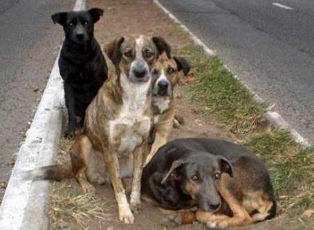 Aumentan casos de abandono y crueldad animal durante la pandemia: activistas