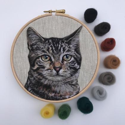 Tabby with wool.jpg
