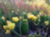 cactus.jpe