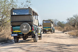 Morning Open Vehicle Game Drive