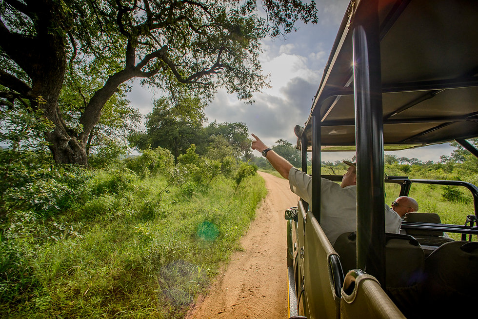 Sightseeing in the Kruger National Park with Nhongo Safaris