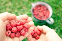Raspberry_006_elina
