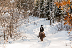 riding-a-horse-in-winter-forest-picture-id664462346