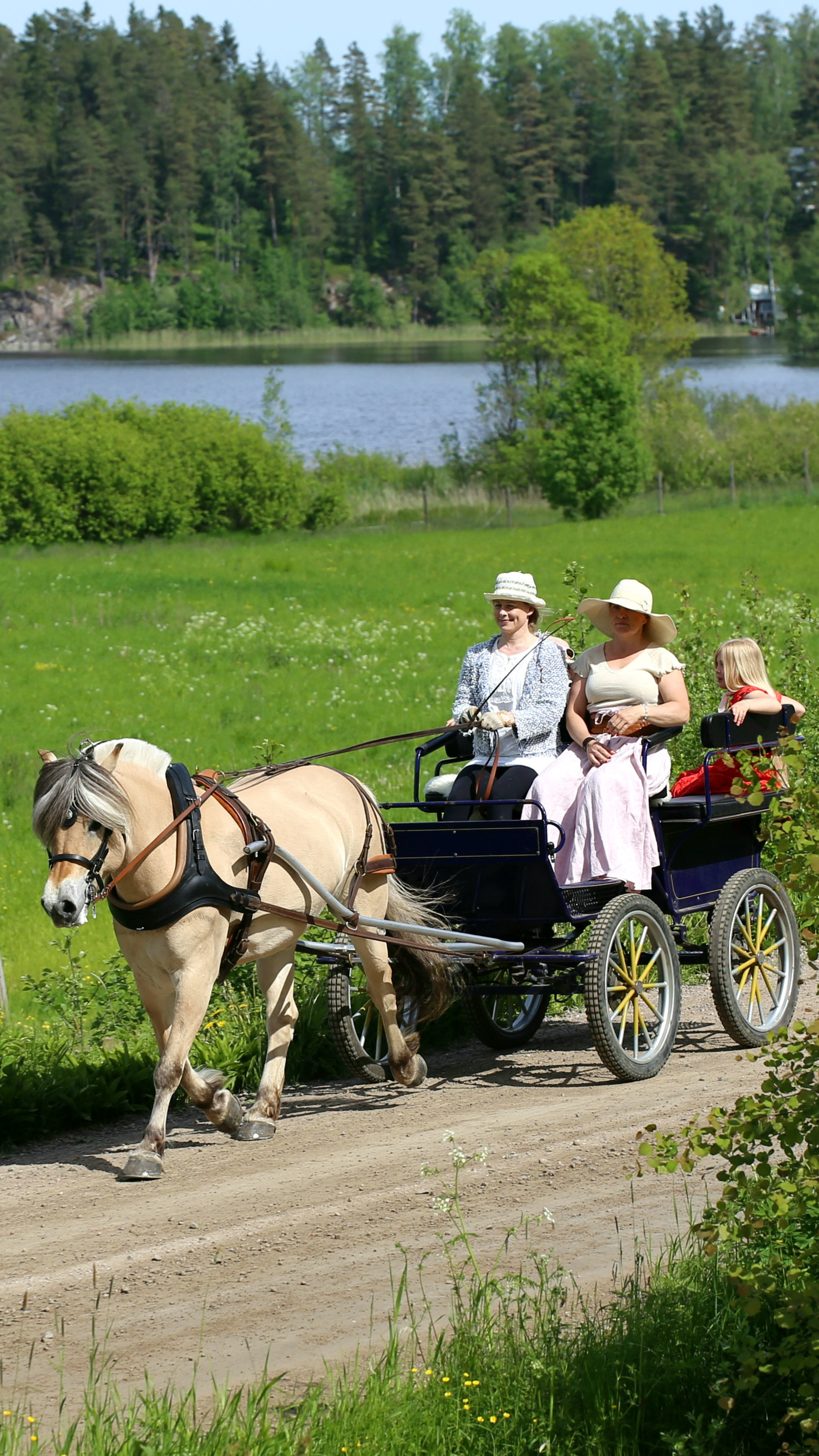 Carriage drive in beautiful countryside