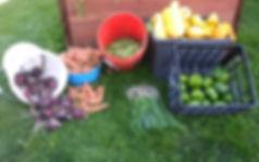 garden donation.jpg
