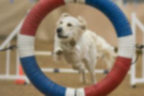 Superdog!  KenGeePhoto