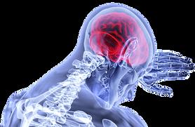 brain-3168269_1280-690x450.png