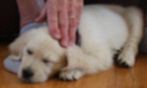 HT1A8510 Puppy and Elderly Hand.jpg