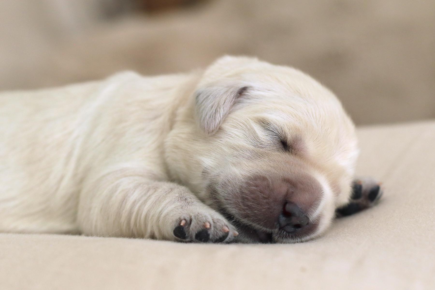 2019 05 17_1423 1 week old puppy.jpg