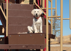 Learning agility at the park