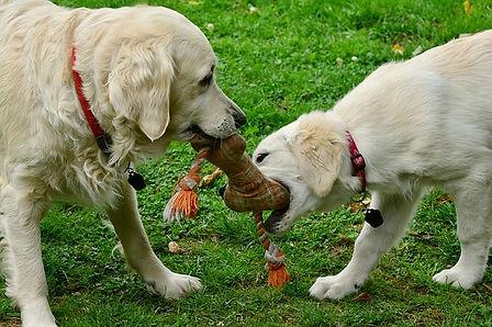 dogs-2556820_640.jpg
