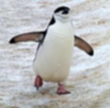 Antartica Wildlife