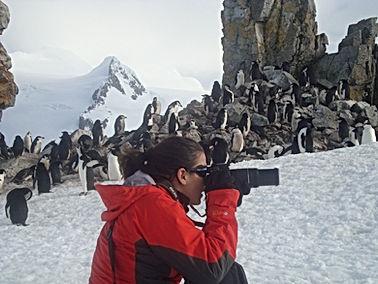 Penguins in Antartica