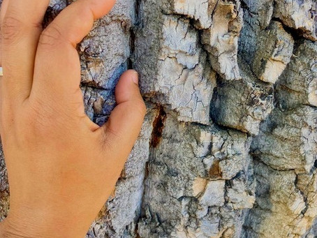Soliloquy of a Tree: Incomplete Series #One