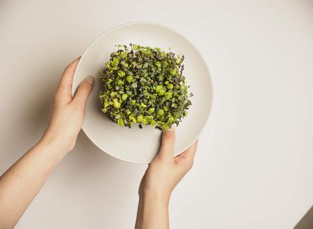 微菜苗的食譜、營養和食用貼士