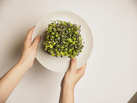 Recipes, Benefits & Tips for Microgreens