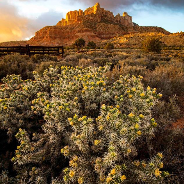 Cactus of Kinesava