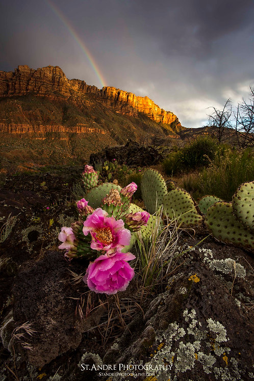 Cactus Bloom in Zion Backcountry
