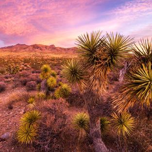 Spiny Desert