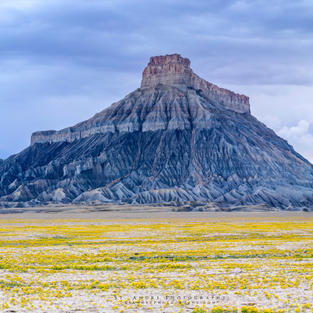 Super Bloom Factory Butte (1 of 1).jpg