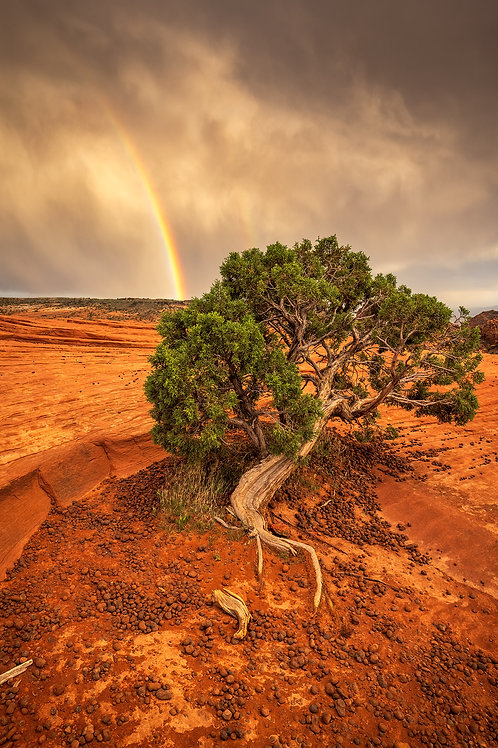 Rainbow in Snow Canyon