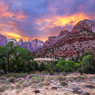The Towers of Zion