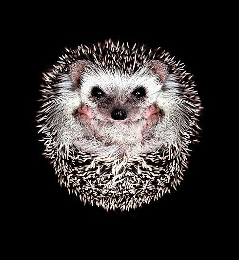 hedge_max_7x.jpg