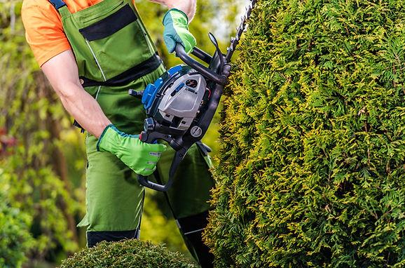 gardener-topiary-job-HGF895Y.jpg